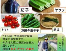 地産週間と地産月間は大原産の野菜がたっぷり!